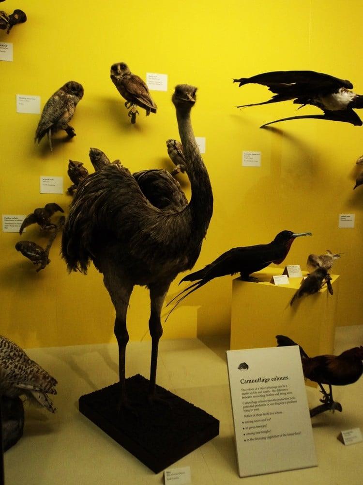 Müzede kurutulmuş ve doldurulmuş çeşitli canlılar bulunuyor.