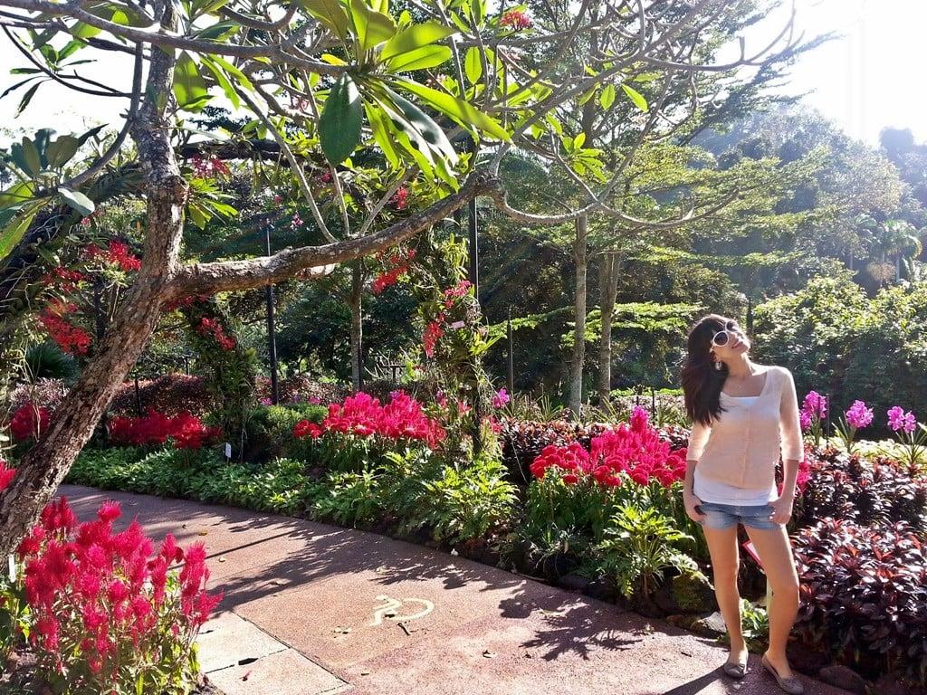 singapur orkide bahçesi