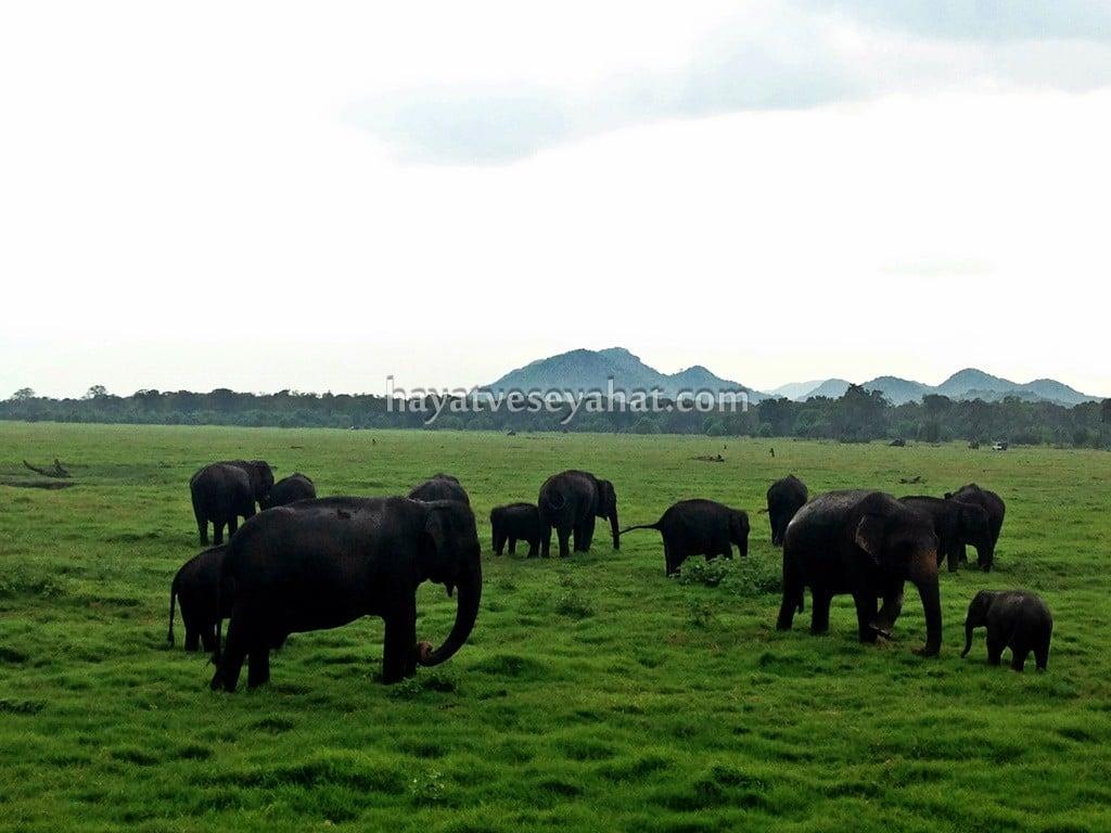 Sri Lanka fil safarisi