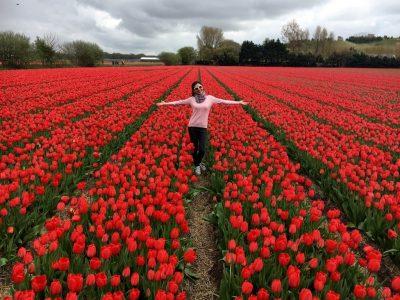 Hollanda Lale Bahçeleri